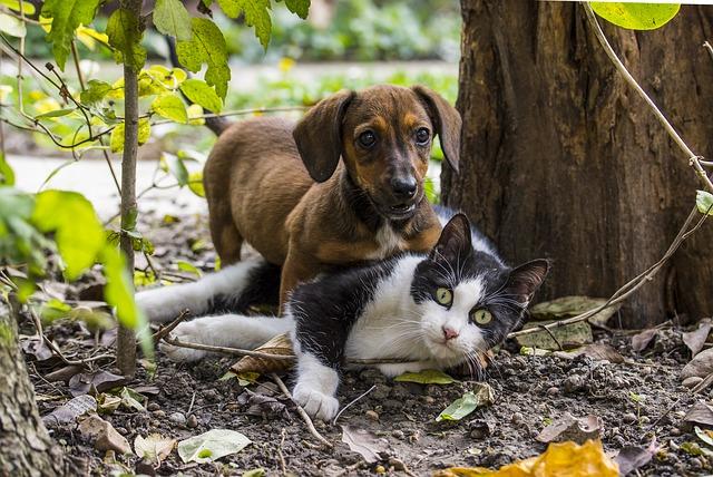 Harmonogram szczepienia psów i kotów przeciwko wściekliźnie