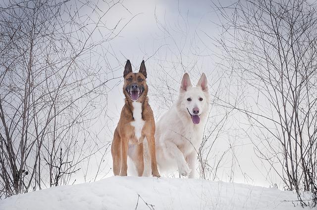 Zadbaj o swoje zwierzęta domowe i podwórkowe! Nadeszła zima i nocą temperatury spadają poniżej zera.